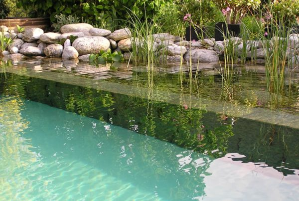 Pool for Nature Naturpool