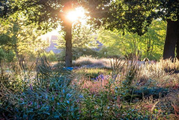 Blühende Gräser im Sommergarten