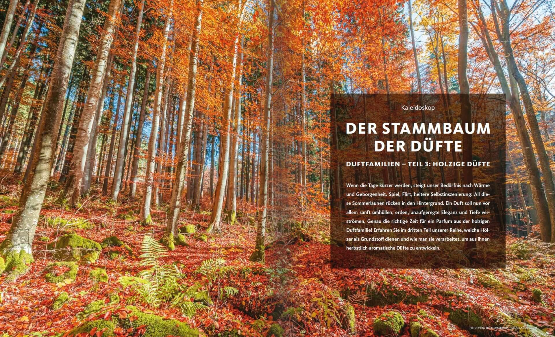 GARTENDESIGN INSPIRATION Ausgabe 5/2018: Holzige Düfte