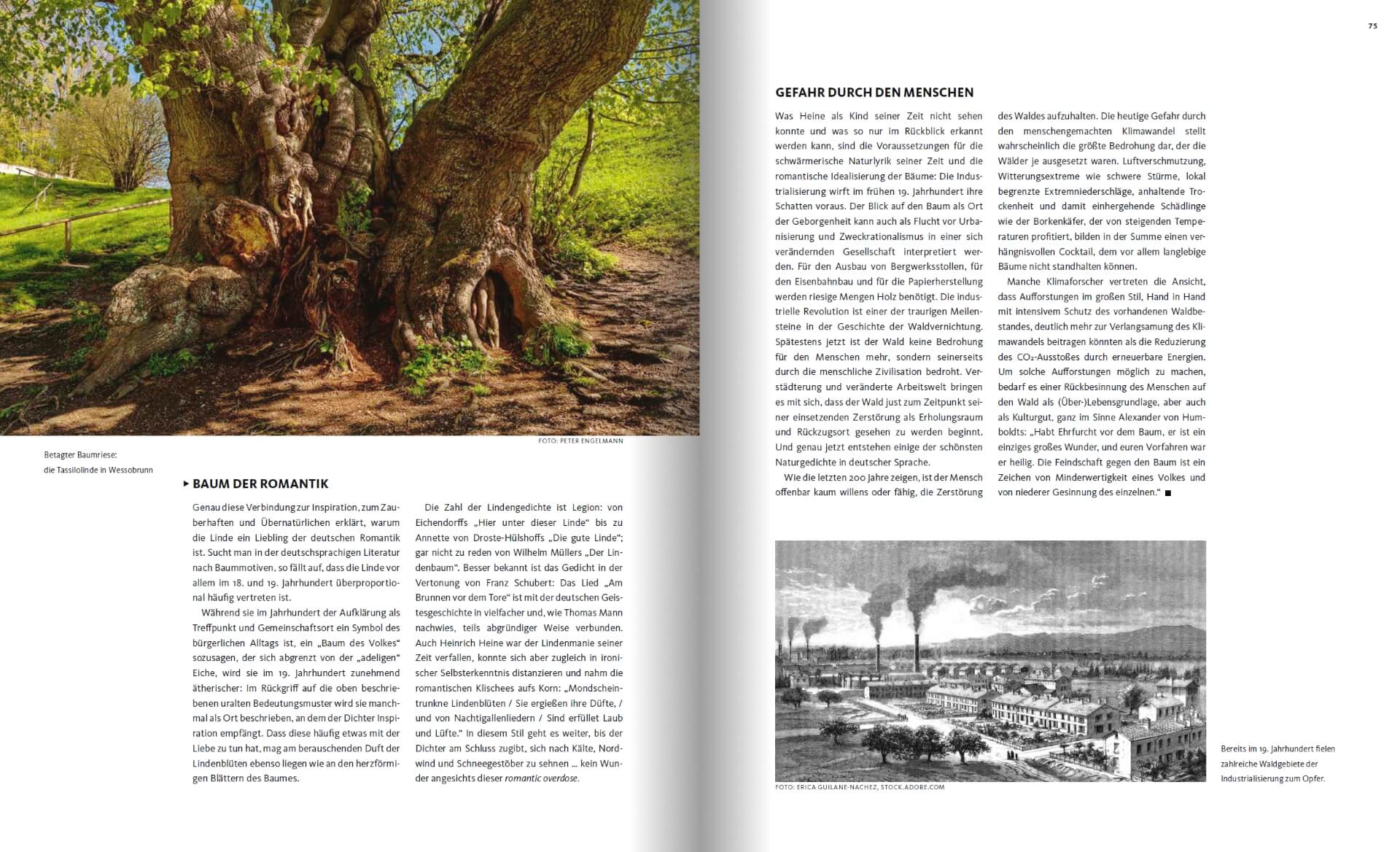GARTENDESIGN INSPIRATION Ausgabe 3/2019: Wunderwerk der Natur: Die Linde