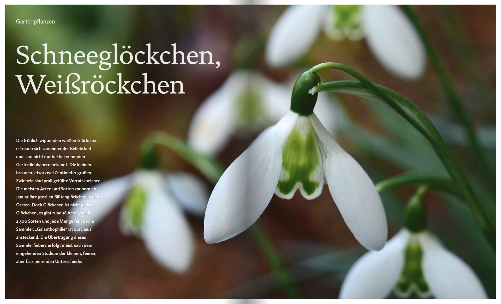 GARTENDESIGN INSPIRATION Ausgabe 1/2020: Schneeglöckchen